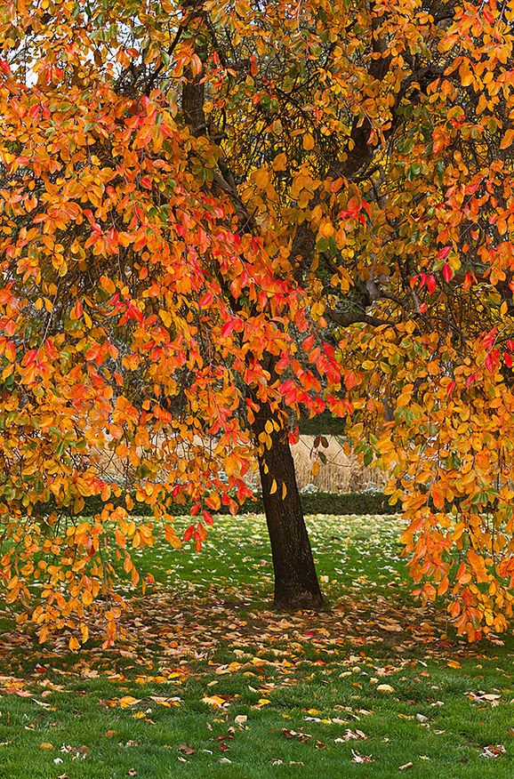 Autumn Colours, Botanical Gardens, Lake Wendouree, Jill Wharton