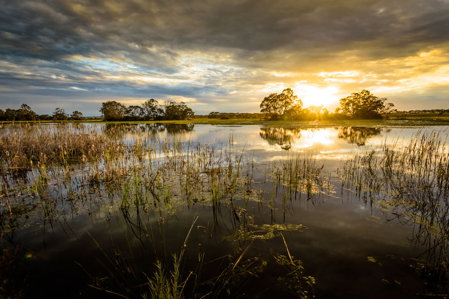 Sunrise over Mullawallah Wetlands Image by Steve Demeye