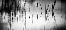 Reeds No 2  Image by Steve Demeye