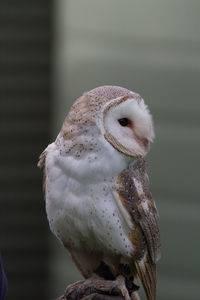 Owl by Trevor Bibby