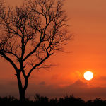 African Sunset ( Jill Wharton ) 2nd Place