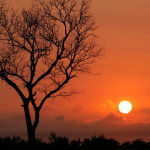 African Sunset by Jill Wharton
