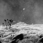 Amongst the Foam (Steve Demeye) Highly Commended