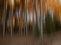 Abstract Forest (Lyn Fowler ) 2nd Place