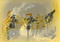 Bird Dance (Brian Hillman) 1st Place