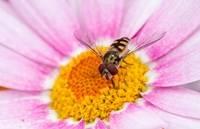 Highly Commended Native Bee Trevor BIbby