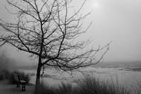 2nd Place Foggy Lake Jill Wharton