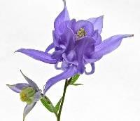 1st Place Purple Bonnet Lyn Fowler