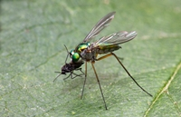 2nd Place Long Legged Fly Trevor BIbby