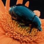 Bugs Life Lyn Fowler Merit