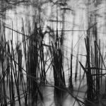Burrumbeet Reeds at Dawn - Kate Both