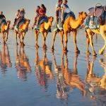 Camel String (Judy Johnson)
