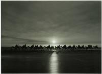 Camels at Broome - Trevor Bibby : Merit