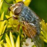 Colourful Fly ( Trevor Bibby)