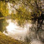 Colours of Autumn (Steve Demeye)