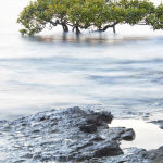 Mangrove Rocks by Judy McEachern Score of 10