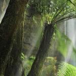 Russell Falls by Judy McEachern Score of 11