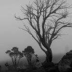 Snowgums in the Mist by Carol Hall Score of 10