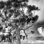 Lone Tree by Trevor Bibby Scored 10