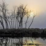 Glow of the Morning Sun by Mark Bevelander Scored 11