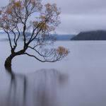 The Wanaka Tree by Judy Mc Eachern Scored 12