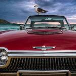 Coastal Sea Birds by Steve Demeye Scored 14
