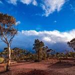 Kalgoorlie Storm by Betty Bibby Scored 13