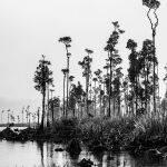 Tai Poutini National Park by Betty Bibby Scored 12