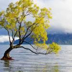 Tree of Life by Jenny Parker Scored 11