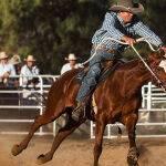 Hold Ya Horses by Anne Wilson Scored 13