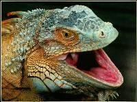 Dragon, Dragon - Arthur Lilley : Merit