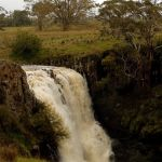 Falls from the Top (Hugh Lees)