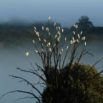 Fogged Cockies by Murray McEachern