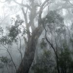 Foggy Forest (Hugh Lees)