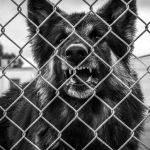 Guard Dog (Greg Tate)