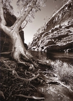 Hamersley Gorge (Betty Bibby) 1st Place Winner of the Herb Richmond and Bon Strange Awards