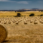 Haybales (Brett Keating)