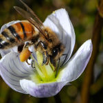 Hungry Bee ( Carol Hall ) Score 12