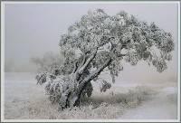 Icy Burden (Bronwen Casey) Merit