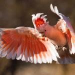 In Flight by Trevor Bibby