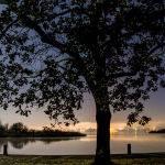 Moonlight on the Lake (Anne Carroll)
