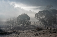 Morning Fog (David Grigg) 1st Place Slides and Winner of the Roger Purcell Memorial Trophy