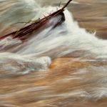 Muddy Waters - Judy Johnson