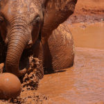 Orphan in Mud ( Jill Wharton ) Score 11