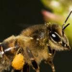 Pollen Mission (Jill Wharton)