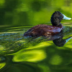 Reflection on Reflections (Jill Wharton)