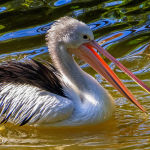 Ruffled Feathers by Mark Bevelander