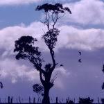 Rural Silhouette (Brian Hillman)