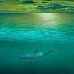 Seaside Concept by Brett Keating