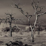 Skeleton Trees Peter Dwyer  Merit